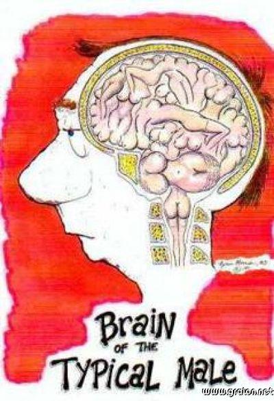 Vg-cerveau-homme