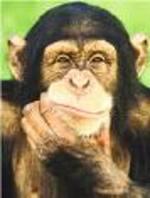 Chimpanz